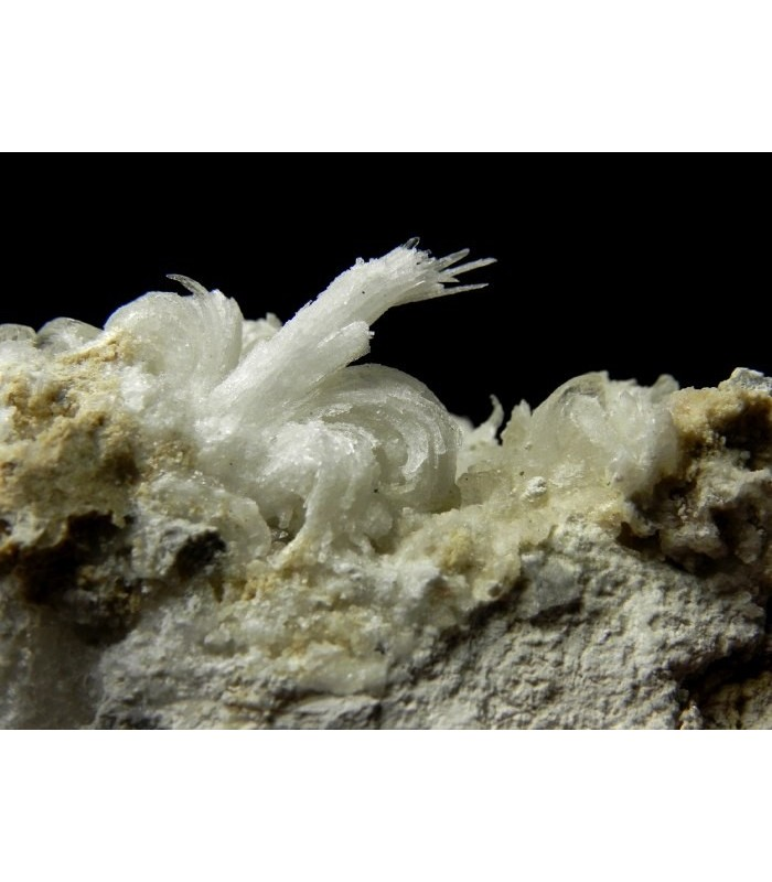 Gypsum - Monte Ceti quarry Novafeltria Italy