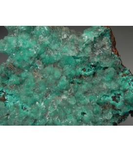 Auricalcite - Mapimi mine Mexico